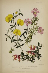 n814_w1150 (BioDivLibrary) Tags: gardening horticulture usdepartmentofagriculturenationalagriculturallibrary bhl:page=57724411 dc:identifier=httpsbiodiversitylibraryorgpage57724411 artist:name=augustainneswithers augustainneswithers hernaturalhistory