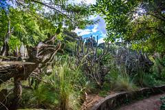 JardÃ-n Botánico de Bogotá (joshbousel) Tags: bogotã¡ bogotã¡botanicalgarden cactus colombia jardãnbotã¡nicodebogotã¡ nature plant southamerica travel