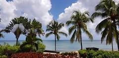 Tropical Paradise (Rckr88) Tags: mauritius island islands travel travelling paradise tropical sea water ocean coast coastal coastline cloud clouds nature outdoors tree trees palmtrees palmbeach palm beach green greenery