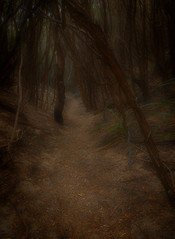 Meandering (Kevin Rheese) Tags: track path meander pointhicks wander dark forest trail mystical bush fairytale dreamy croajingalongnationalpark mysterious
