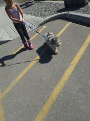 FOUND female dog #elbowdrive now AT Calgary Animal Servicesl Pls RT, share help reunite Found on Elbow Drive near St.Catherine School (#CanyonMeadows). She has no microchip, no tattoo, and is not wearing a collar. YYC Pet Recovery shared a post. Found thi (yycpetrecovery) Tags: ifttt march 31 2019 0111am
