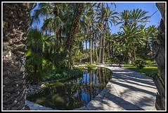 Paseando por Elche (edomingo) Tags: edomingo nikond610 nikkor1835 elche huertodelcura alicante plantas jardín