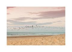 Life on the beach (gerritdevinck) Tags: beach beautifullight beautifulcolors beautifulclouds beachlife beachview beachphotography pastelcolors softcolors belgium belgie belgiumcoast coastline westvlaanderen weskust sea seaview northsea sealive birds landschap landscape fujifilm fujifilmseries fujifilmxseries fujifilmbelgium fujifilmphotography fujifilmxpro2 xseries xpro2 xf35mmf2 fujinon35mmf2