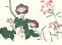 Japanese morning glory and fringed pink (Japanese Flower and Bird Art) Tags: flower morning glory ipomoea nil convolvulaceae fringed pink dianthus superbus caryophyllaceae ukiyo woodblock picture book japan japanese art readercollection