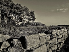 Arradon-Golfe du Morbihan-Bretagne sud-Fr (P_Lubin_Q) Tags: arbres mer mur noirblanc bretagne