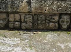 Mayan Glyphs (tom_2014) Tags: stonework stone glyph maya mayan mayanempire copan mesoamerica travel tourism skulls frieze mayanart art sculpture honduras centralamerica history archaeology building temple mayantemple religion religious religiousart masonry unesco worldheritagesite worldheritage