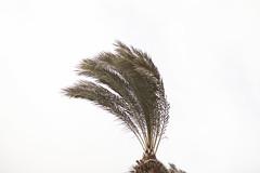 Palm Trees & Wind in Pat Junction-4 (zeevveez) Tags: זאבברקן zeevveez zeevbarkan canon palm wind