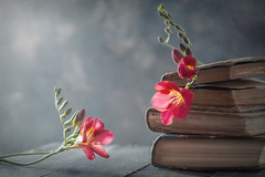"""Flowers at home"" (mariajoseuriospastor) Tags: bodegon stilllife pink flowers"