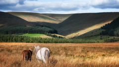 The beautiful south (Einir Wyn Leigh) Tags: landscape ponies hills mountains colorful nature outside rural rugged light sunshine happy wales uk green