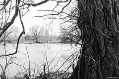 Early Spring (gabi-h) Tags: trees barebranches view princeedwardcounty princeedwardpoint gabih april water harbour lookingacrossthewater monochrome blackandwhite bark roughtexture