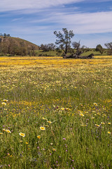 Springtime in the Central Valley (Teresa_J) Tags: carrizo plain national monument apr 2019
