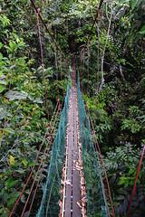 Canopy walk, Taman Bukit Gemok, Tawau, Sabah. (Andy @ Pang Ket Vui ( shootx2 )) Tags: fujifilm x100f wclx100ii bukit gemok canopy walk forest hiking tawau sabah wide angle lens conversion