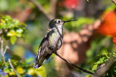 OC_Birds_12-24-18-4