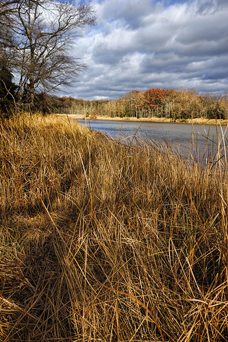 Dundee Creek