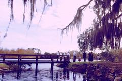 Wedding party at Lake Alice (Anna Peterson) Tags: pentax universityofflorida pentaxk3 pentaxda15f4ltd bridge gainesvillefl 52frames