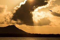 190114-F-WU042-0006 (Whiteman AFB) Tags: usaf whiteman b2 pacom pacaf stracom air force hickamairforcebase hawaii unitedstates us