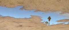 Palm in the puddle (radargeek) Tags: ridgecrest ca california 2018 december rain puddle flipped palmtree reflection parkinglot