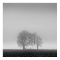 Haze & Light (Wayne Interessiert's) Tags: landschaft landscape paysage monocxhrome bw blackwhite noirblancphoto bäume trees arbres wäldchen smalwood bosquet nebel fog brouillard minimalismus minimalisme winter hiver