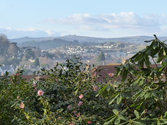 P1180535 (jrcollman) Tags: camelliajcwilliams dartmoor haytor camellia places plants devon europeincldgcanaries 21beechwoodgarden archived newtonabbot britishisles cplant