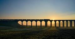 66424 on Ribblehead Viaduct (robmcrorie) Tags: 66424 mount sorrel carlisle ribblehead viaduct sunset 1z10 nikon d850 6c89 mountsorrel settle railway