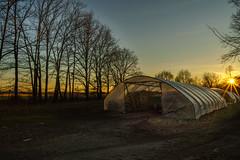 Der Holzplatz (KaAuenwasser) Tags: holzplatz iffezheim holz platz brennholz bäume baum wiese sonnenuntergang sonne sonnenstern stern landschaft farben himmel abend sony ilce7rm3 planen tunnel folientunnel wald