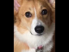 Dog missin the baby - Cute Dog Face (tipiboogor1984) Tags: aww cute cat funny dog youtube