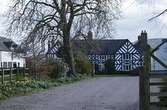 Brassey Green Hall 120319_DSC3283 (Leslie Platt) Tags: exposureadjusted straightened tarporley cheshirewestchester halftimbered springflowers brasseygreenhall tiverton
