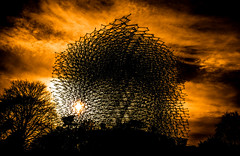 Hive sunset (Malamute01) Tags: the hive kew gardens royal botanical london