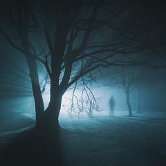 Realms II (www.neilburnell.com) Tags: trees woodland duotone cinematic mystery fineart concept light fog mist night woods