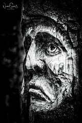 """SAD FACE"" - In memory of the terror victims in New Zealand (nigel_xf) Tags: victims opfer newzealand terror terrorism terrorismus trauer holzschnitzerei tree baum chiemgau bayern bavaria chiemgaueralpen nikon d750 nigel nigelxf vsfototeam neuseeland sterntalerfilze bw schwarzweis bnw monochrome face gesicht"