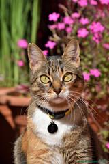 La ingeniera (Juan R. Lascorz) Tags: haustier haustiere mascotas mascota pet pets animaldecompagnie animauxdecompagnie