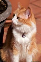 DSC_0103_02 (Juan R. Lascorz) Tags: haustier haustiere mascotas mascota pet pets animaldecompagnie animauxdecompagnie