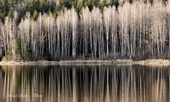 Water reservoir Octárna (Michal Ritter) Tags: czechrepublic autumn bohemia brdy black water reflections green forest czech national nature landscape nikon