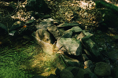 Backwater (Serbian Dictator) Tags: water forest green shadows backwater leaves sunray sigma 3014 sony carpathians