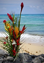 Offering (kimbar/Thanks for 4 million views!) Tags: oahu hawaii memorial flowers pacificocean beach offering