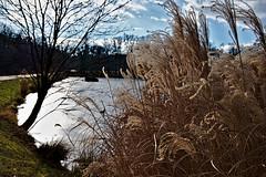 Maksimir (roksoslav) Tags: zagreb croatia 2019 nikon z6 nikkorz2470mmf4s maksimir lake jezero 5jezero