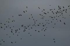 IMG_5182 (monika.carrie) Tags: monikacarrie ythan wildlife scotland
