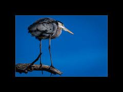D8506630 (Martin van der sanden) Tags: circle b bar lakeland fl nikon d850 200500mm