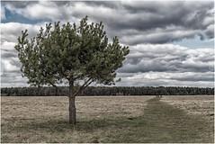 Die Panzerwiese in München (Janos Kertesz) Tags: panzerwiese wiese baum himmel wolken münchen bayern bavaria munich field tree sky clouds