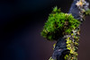 Garden on a stick (pioytre) Tags: nature plant branch green tree moss lichen