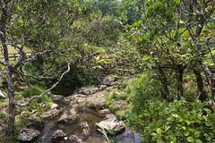 Road to Alexandra Falls / Дорога на водопад Александра (dmilokt) Tags: природа nature пейзаж landscape река river водопад waterfall dmilokt water