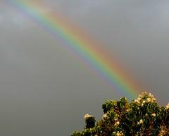 Natural Prism Effect (padraic_koen) Tags: rainbow adelaide southaustralia