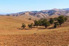 Trees and Mountains on the Bridle Track, Southern Flinders Ranges, South Australia (Red Nomad OZ) Tags: australia southaustralia flindersranges southernflindersranges outdoor bridletrack roadtrip mountain ranges landscape scenery arid farmland tree