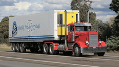 1960's Top Movers (3/3) (Jungle Jack Movements (ferroequinologist)) Tags: 1960 international rd 200 mack b 61 kenworth kw kenny w 924 harvester ih inter ken highway hauling haulin hume sydney 2019 yass classic historic vintage veteran hcvca vehicle run hp horsepower big rig haul haulage freight cabover trucker drive transport delivery bulk lorry hgv wagon nose semi trailer deliver cargo interstate articulated load freighter ship move roll motor engine power teamster tractor prime mover diesel injected driver cab wheel