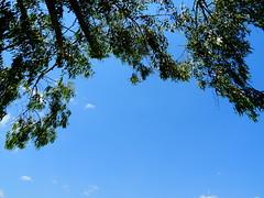 DSC03362 (omirou56) Tags: 43ratio sonydscwx500 sky trees nature natur natura φυση ουρανοσ δεντρα fabulousfoliage