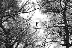 Z à contre jour (Arnadel) Tags: accrobranche arbre contre jour contrejour morieux bretagne