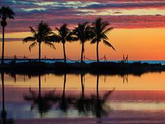 Sunrise at Matheson (joiseyshowaa) Tags: morning dawn sunrise sun rise twilight orange sky silhouette palm fronds trees biscayne bay gulf stream