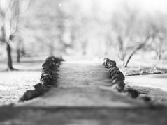 Stone Bridge - Spring Grove Cemetery (edewbank) Tags: aeroektar filmfilmforever