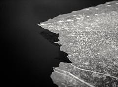 Let It Go. (Diaffi) Tags: letitgo frozen ice water snow analog monochrome mediumformat mamiya645pro selfdeveloped kodaktmax100 expiredfilm052003 film120 rodinal abstract nature ishootfilm