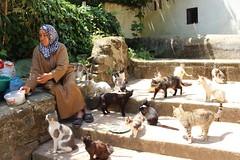 Cat and eel lady (Buster&Bubby) Tags: locallegend localfolklore eel catandeellady berber mosque almohad romanruins sala shalla phoenecians minaret chellah